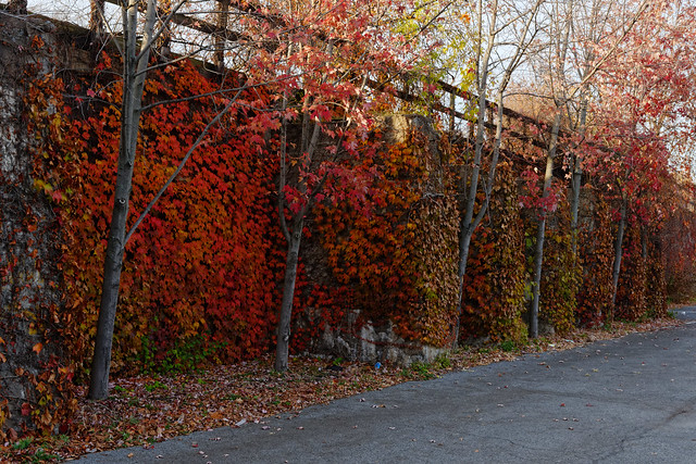Fall Color in the City