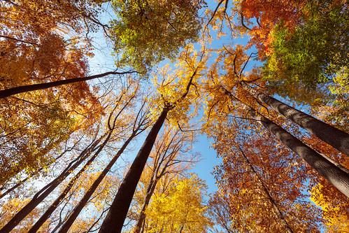 bedfordreservation clevelandmetroparks fall foliage ohio park trees