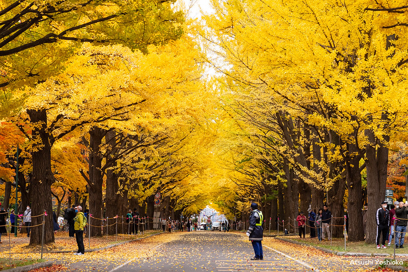 Autumn Leaves 2020 in Sapporo