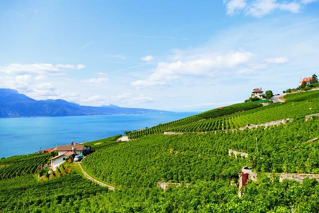 11.08.20.Vignobles de Lavaux (Suisse)