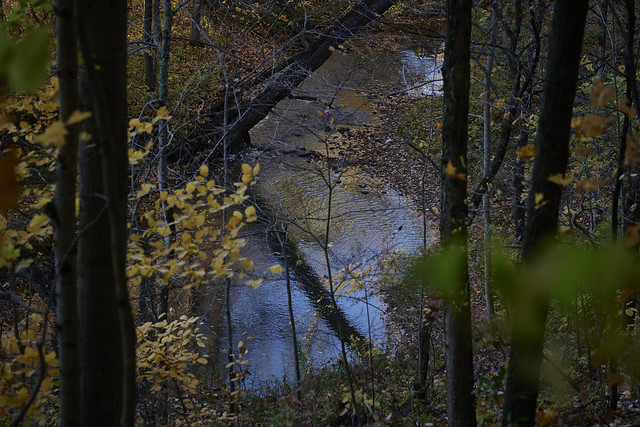 with trees, by the river, 10-12-20, 1