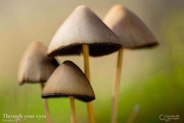 Through your eyes. on Explore 20.11.09