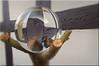 Herbstkugel - crystal ball