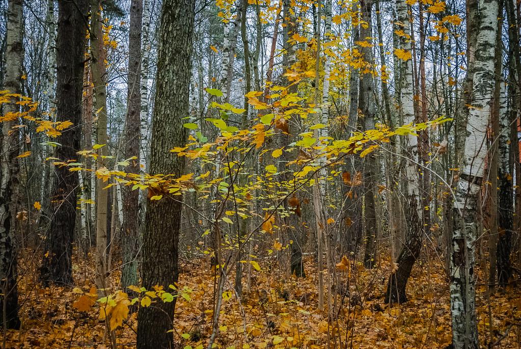 Beautiful autumnal colours 13:49:17 DSC_8937