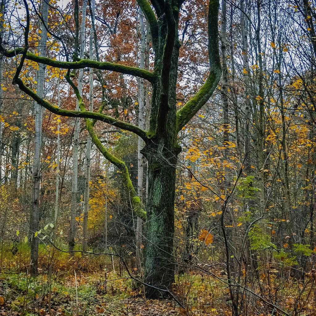 Lovely shot дерево  13:48:54 DSC_8936-2