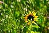 Sunflower bokeh - always facing the sun | November 8, 2020 | Bornhöved - Schleswig-Holstein - Germany