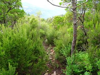 Descente du sentier de Conca : vue du sentier