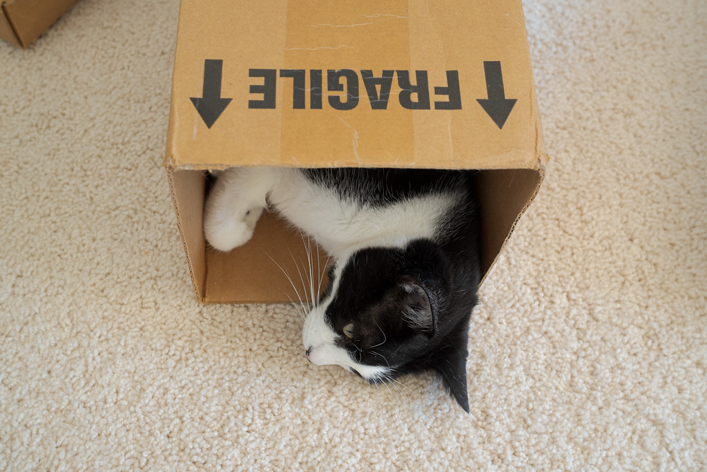 The head of our cat Boo sticks out of a box marked fragile on November 5, 2020. Original: _RAC7869.arw