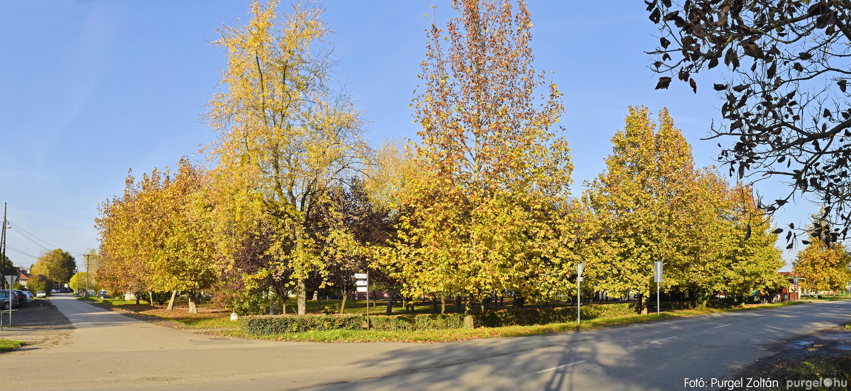044 2020.11.08. Szegváron járt az ősz - Fotó: Purgel Zoltán© _DSC3341q.jpg