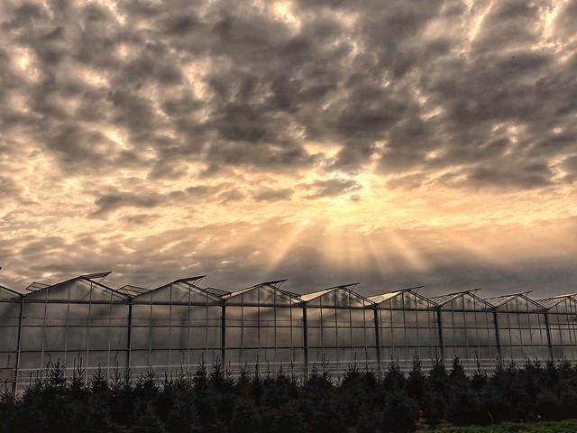 Sunset over glasshouses