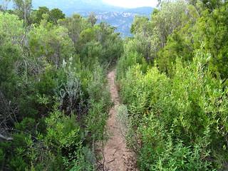Descente PR5 vers Piscia Cava : de la repousse le long du sentier