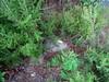 Certaines balises commencent à disparaître sous la végétation !