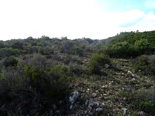 Pianu d'Orovu : le pianu