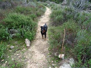 Sur la descente du PR5 vers le Cavu : suite de la promenade du chien