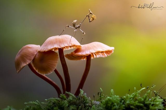 Top of Mushrooms