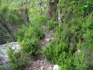 Descente du sentier de Conca : arrivée à la source