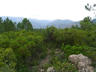 Sentier du Pianu d'Orovu : les arbousiers