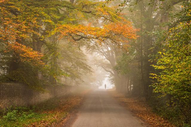 autumn in Sussex