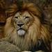 "<p><a href=""https://www.flickr.com/people/154721682@N04/"">Joseph Deems</a> posted a photo:</p>  <p><a href=""https://www.flickr.com/photos/154721682@N04/50580257566/"" title=""Jabulani""><img src=""https://live.staticflickr.com/65535/50580257566_3a475cd44b_m.jpg"" width=""240"" height=""239"" alt=""Jabulani"" /></a></p>  <p>Fort Worth Zoo</p>"