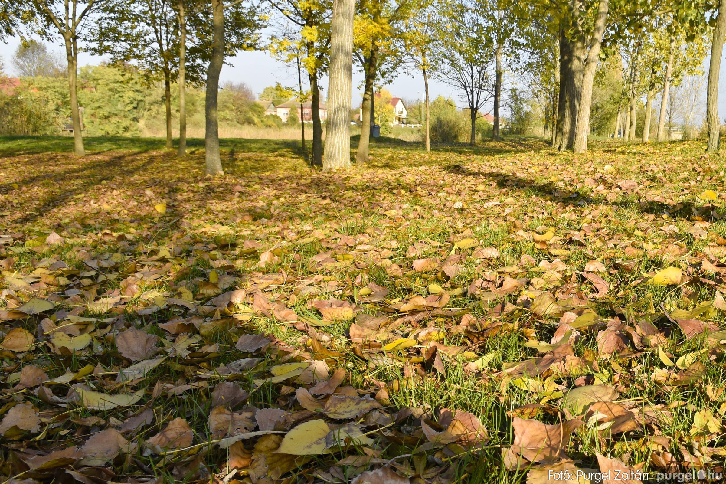 048 2020.11.08. Szegváron járt az ősz - Fotó: Purgel Zoltán© _DSC3349q.jpg