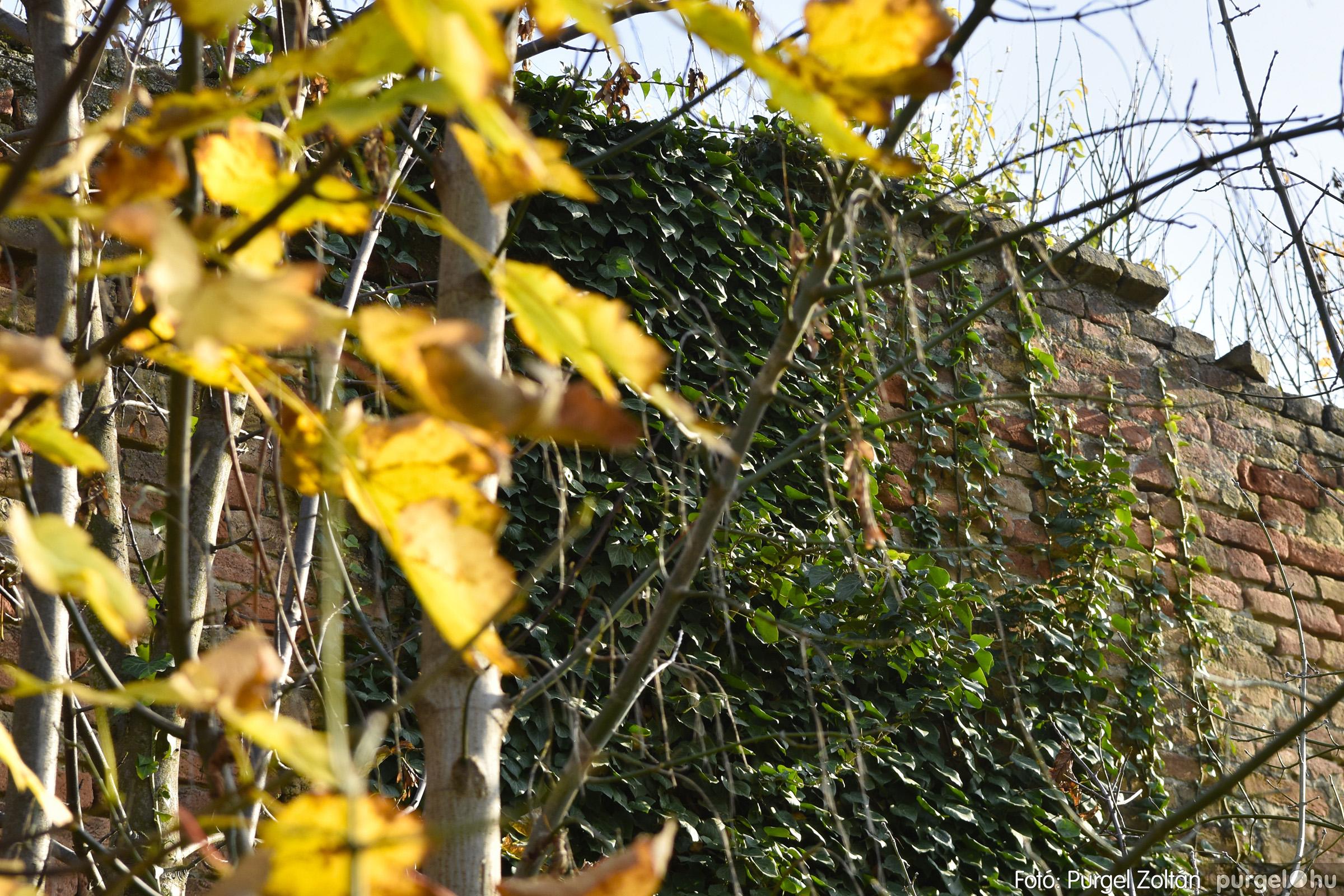 020 2020.11.08. Szegváron járt az ősz - Fotó: Purgel Zoltán© _DSC3278q.jpg