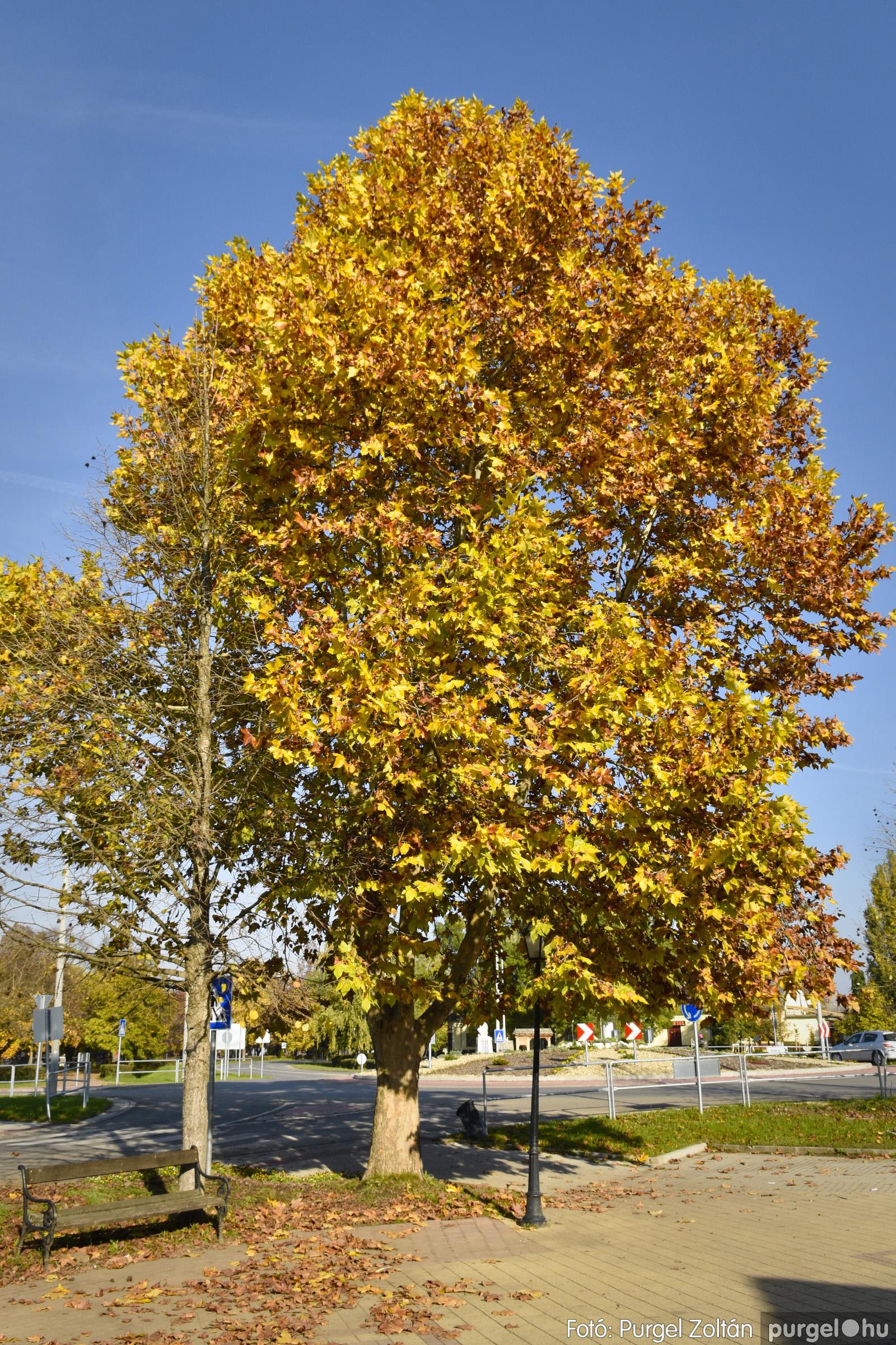 001 2020.11.08. Szegváron járt az ősz - Fotó: Purgel Zoltán© _DSC3246q.jpg