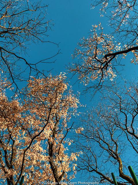 Autumn Foliage (Day 240)