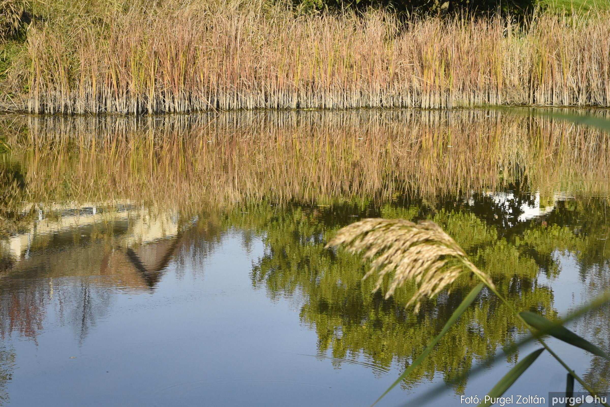 027 2020.11.08. Szegváron járt az ősz - Fotó: Purgel Zoltán© _DSC3295q.jpg