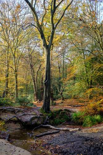 Autumn Brook | by icomley