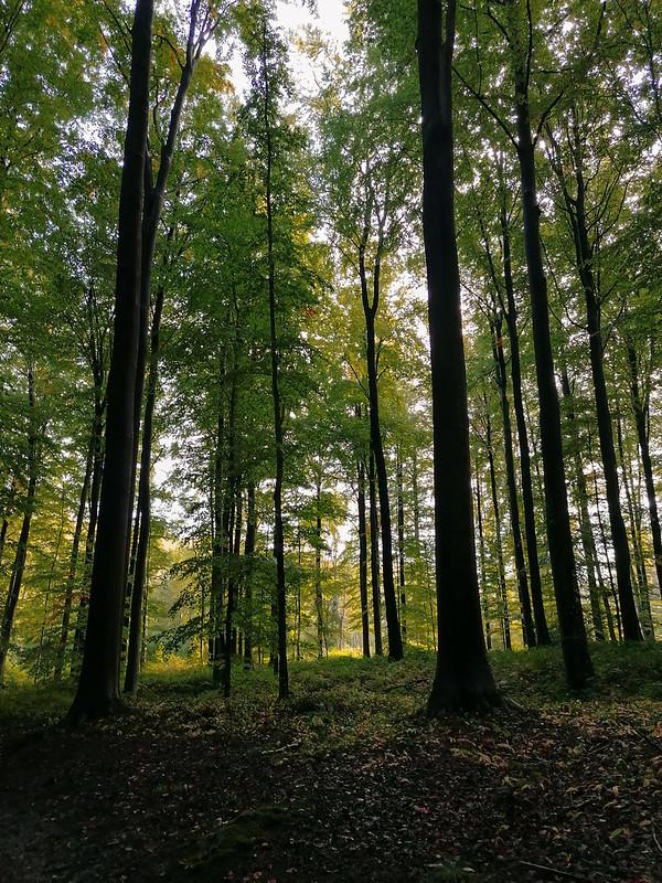 Autumn break en Flandes