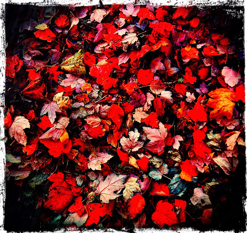 red Maple leaves cover the sidewalk on Granville St in the fall in Vancouver run through the photo app Pixlromatic