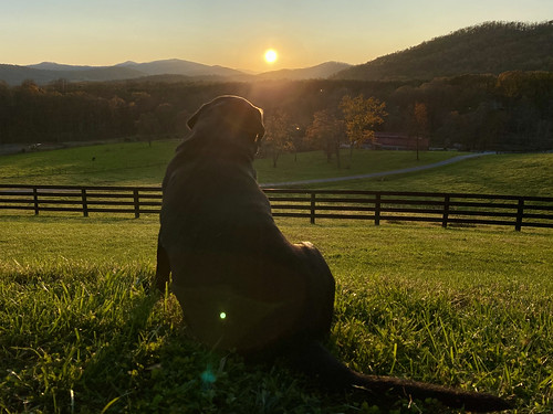 remote flickrfriday sunset dog labrador retriever bourbon distillery virginia shotoniphone