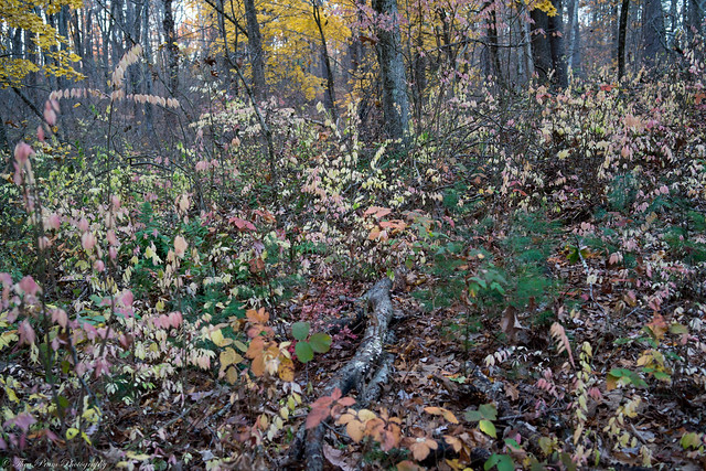 An autumn special on the forest floor.