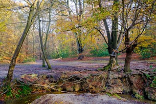 Woodland Meandering | by icomley