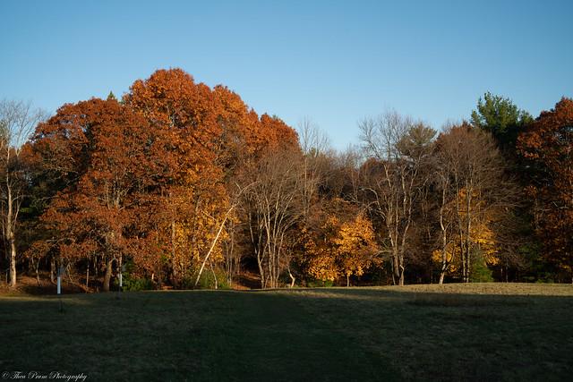 Autumn's delight.