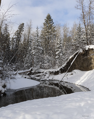 edmonton alberta canada snow water winter sky trees creek reflections millcreekravine nikon z7 nikonz7