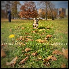 Action Shot of lil'-Man- CUMIN........