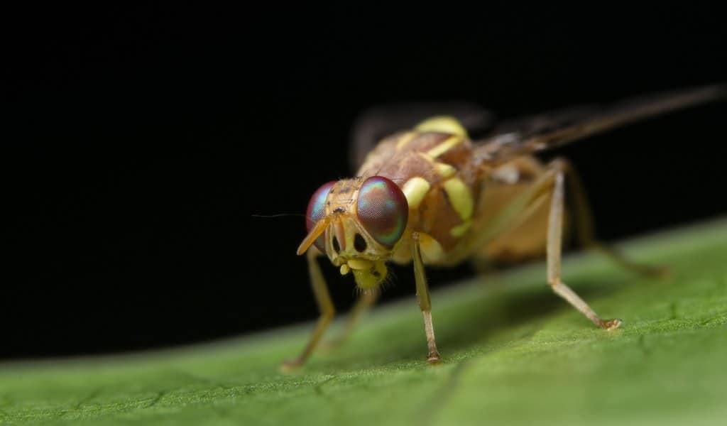 le-système-nerveaux-des-insectes-permet-améliorer-IA