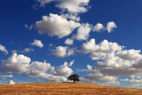 4cornersphoto autumn calaverascounty california centralvalley clouds fall grassland hill landscape nature northamerica oak outdoor quercuslobata rural sanjoaquinvalley scenery shadow sky storm unitedstates valleyoak weather valleysprings motherlode