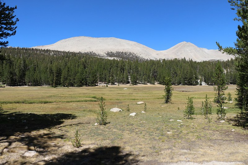 Looking across Whitney Creek and Crabtree Meadow toward Peak 12800 and Mount Young (13176 ft elev)
