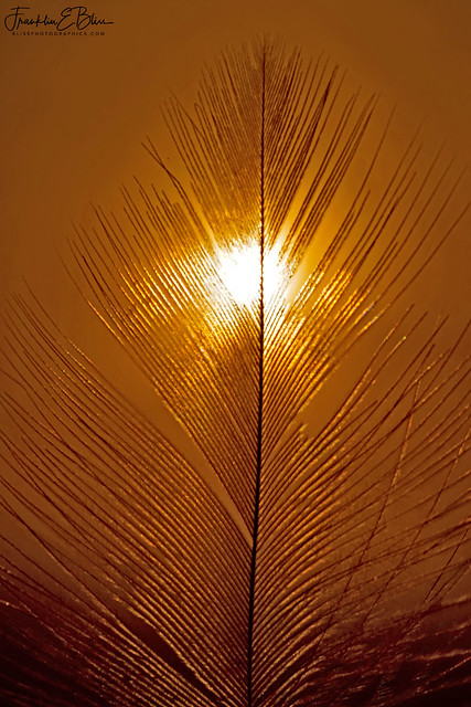 Feather Filter for the Sun