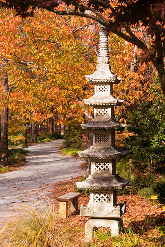 fall autumn outside foliage yellow orange nature light path japanesegarden mapletree japanesemaple november colors beautiful beauty gibbsgardens canon 2020 bench hbm landscape old new art digital garden trees coth5
