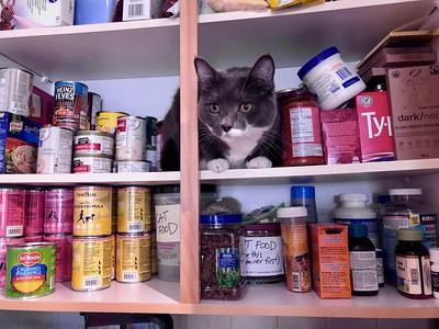 Cats in the cupboard