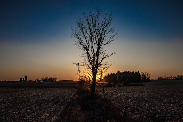 LEAFLESS TREE ON FADING SUN