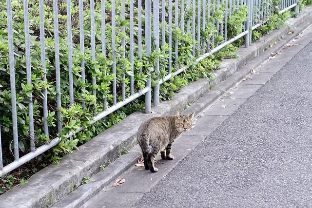 Today's Cat@2020−11−09