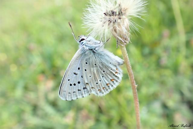 Butterfly 2111