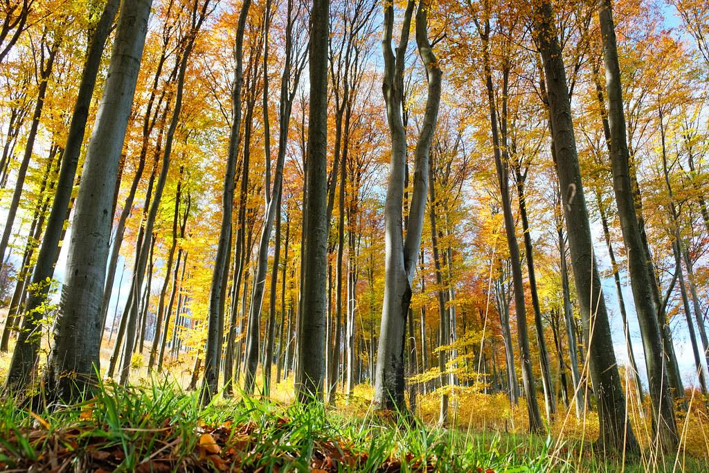 Fall foliage in Kőszeg Mountains, Őrség National Park, Hungary