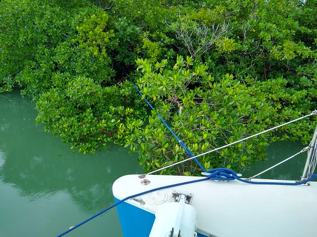 Tied to Mangroves 1