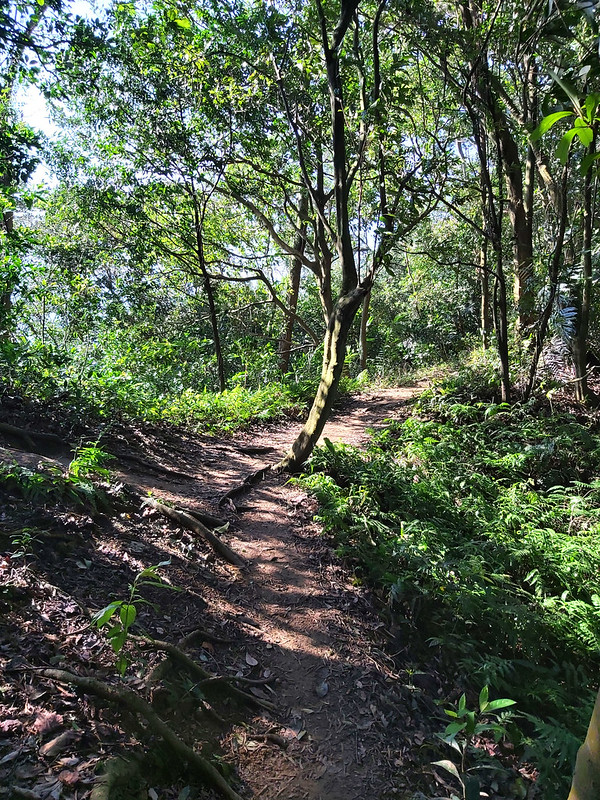 Mt. Yuan to Daxi: an easy trail from Sanxia to Daxi to see the layers of spectacular mountains and visit famous old streets after the hike in Taiwan