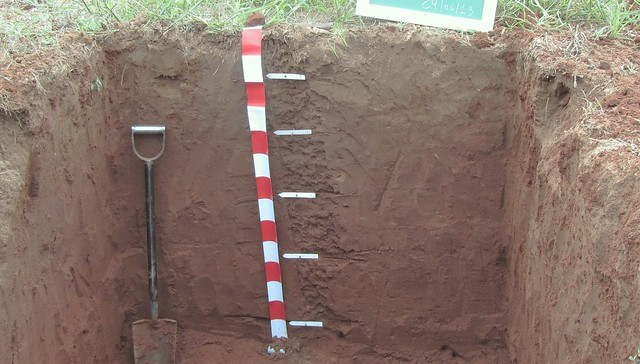 Soil profile of Ensenada Grande soils